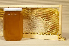 Waxed honeycomb with honey Royalty Free Stock Photos