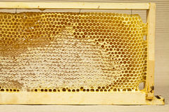 Waxed honeycomb with honey Royalty Free Stock Photo