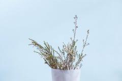 waxflower i den vita plast- behållaren Royaltyfria Bilder