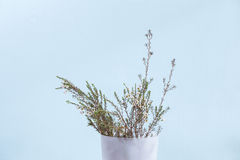 waxflower in white plastic tank Royalty Free Stock Images