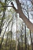 Waxhaw, OR qu'une corde accroche d'un arbre en 2018 images stock