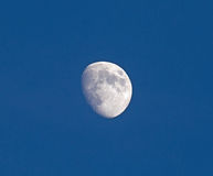 Waxing Gibbous Moon in Blue Sky Royalty Free Stock Photo