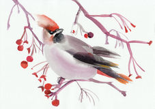 Waxwing on a branch Royalty Free Stock Images