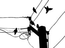 Waxwings on wire Stock Photo
