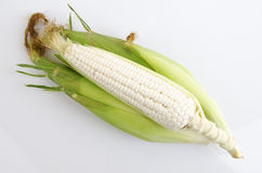Waxy Corn Royalty Free Stock Images