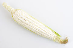 Waxy Corn Stock Photos