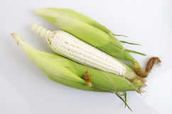 Waxy Corn Stock Photo