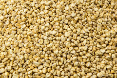 Waxy Corn Seeds Royalty Free Stock Images