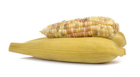 Waxy corn on white background Royalty Free Stock Images