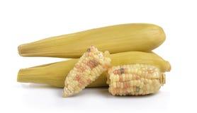 Waxy corn on white background Stock Photos