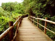 Way. Nature - way between green trees stock photo