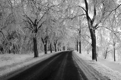 The way. Winter way Royalty Free Stock Image