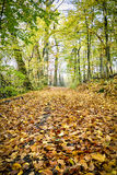 Way in an autumn forest Royalty Free Stock Images