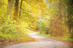 Way through an autumn forest Royalty Free Stock Photos