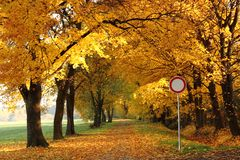 Way in the autumn park royalty free stock photo