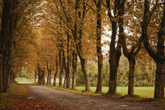 Way for autumn Stock Photography