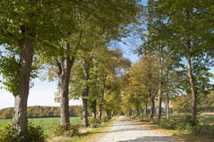 Path in autumn Stock Photography