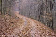 Way in the autumn wood Royalty Free Stock Images