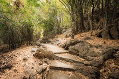 The way through the  bamboo forest in autumn season. Royalty Free Stock Photo