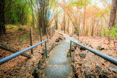 The way through the bamboo forest in autumn season. - (In the wi. Nd motion blur Stock Photo