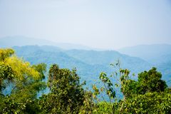 Tree Mountain at Doi Tung royalty free stock image
