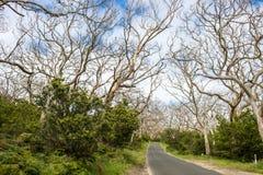 Way through bare trees Stock Photos