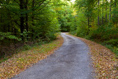 Way of the beautiful fall foliage in a forest. Stock Images