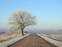 Road and beautiful tree in winter, Lithuania royalty free stock image