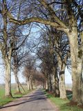Road and beautiful spring  trees, Lithuania Royalty Free Stock Image