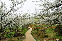 Way through Blossoming garden Stock Photos