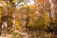 Way through a colorful autumn forest royalty free stock images