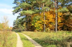 Colorful autumn trees and road, Lithuania Stock Images