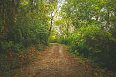 Way through the deep green forest. natural Rainforest background. Road through the deep green forest. natural Rainforest background stock photos