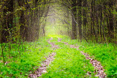 Way in deep spring forest, selective focus Stock Photography