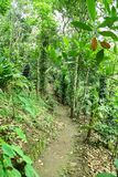 Way  in the  dense forest. From Indian jungle Stock Photos