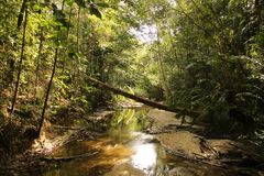 A way through the dense jungle stock images
