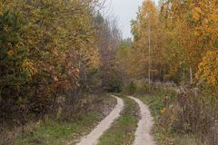 A way through the evening autumn forest. Around the trees with yellow leaves. Autumn road in the evening in a deciduous forest. There are a lot of yellow leaves Royalty Free Stock Image
