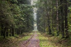 Way in fall forest. With yellow autumn leaves and high dark trees Royalty Free Stock Photos