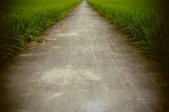 The way in farm rice field Stock Photos