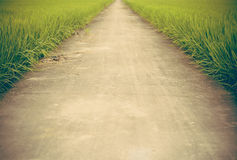The way in farm rice field Royalty Free Stock Image