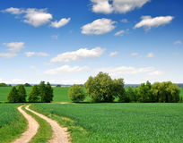 Way in field Stock Image
