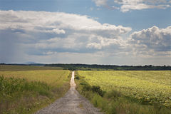 Way and field Stock Photo
