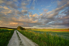 Way in the fields. Landscape lit by the last rays of the sun with a dirt road Royalty Free Stock Photos