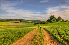 Way in the fields. Summer evening landscape with country road Stock Photos