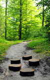 Way through forest Royalty Free Stock Photo