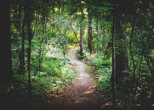 Way in Forest during Daytime Royalty Free Stock Photo