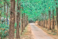 Way in forest hue color Stock Image