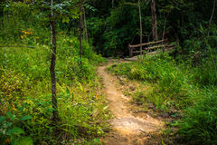 Way in forest Stock Photos