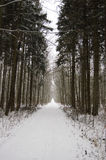 Way. Forest way in the winter Stock Photography