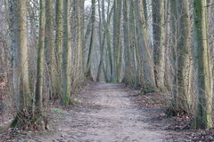 forest track in the winter Royalty Free Stock Photo